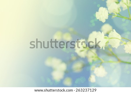 Background of white flowers. - stock photo