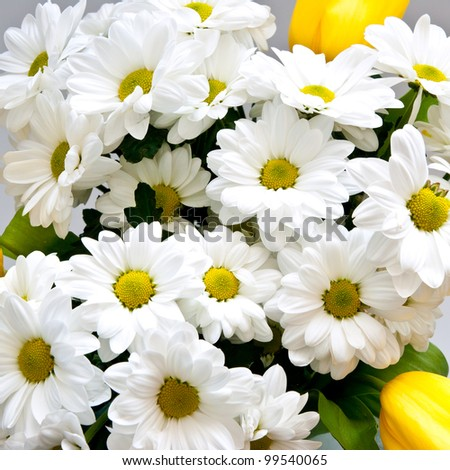 background of white flowers closeup