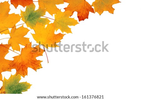 background of yellow autumn leaves placer on white