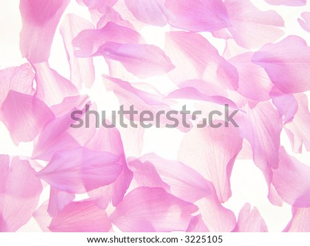 Background op pink petals on white background
