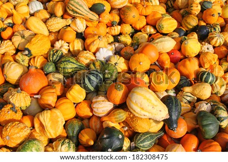 Background photo of freshly harvest gourds, squashes, and pumpkins on a sunny day in Autumn, Europe - stock photo