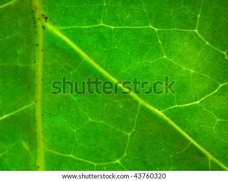 Background Picture of Leaf Texture