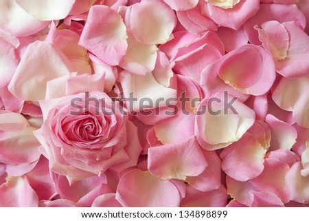 background picture of pink rose petals