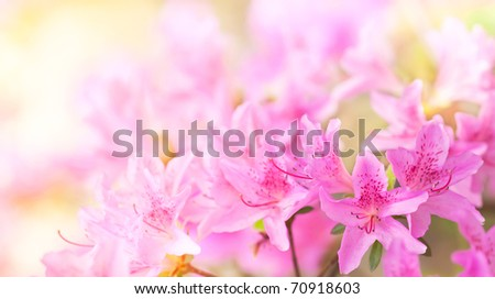 background pink flowers - stock photo