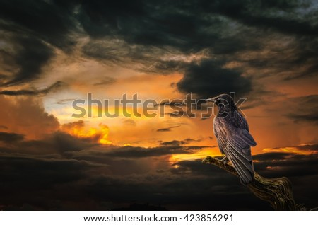 background, Raven on stormy sunset. (illustration of a fictional situation, in the form collage of photos) - stock photo