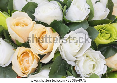 Background rose flowers