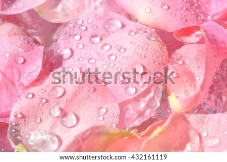 background, rose petals, water drops