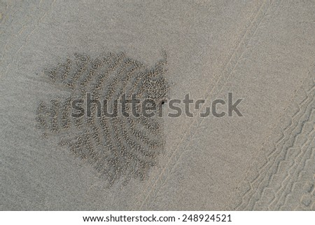 Background, sand, traces of mink small crab - stock photo