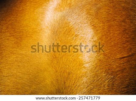 background skin horse - stock photo