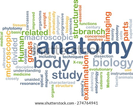 Background text pattern concept wordcloud illustration of anatomy