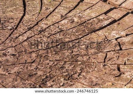 Background/Texture, Land parched by drought,Cracked earth separation. - stock photo