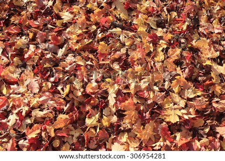 background texture of yellow leaves autumn leaf background - stock photo