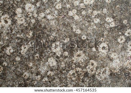 background textured surface cement on floor have moss nature from rain water