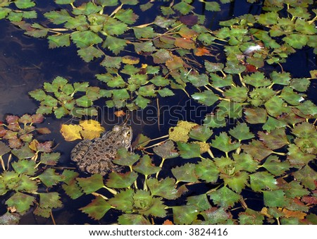 Background: water plants and frog - stock photo