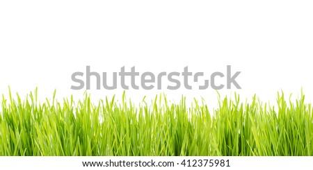 background wheatgrass - stock photo