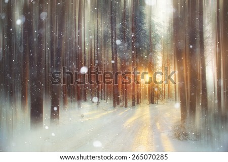 background winter forest sunny day - stock photo