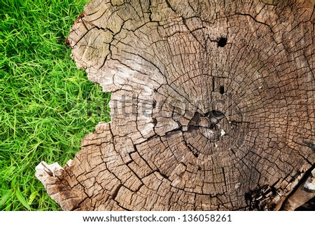 background with a stump and grass - stock photo