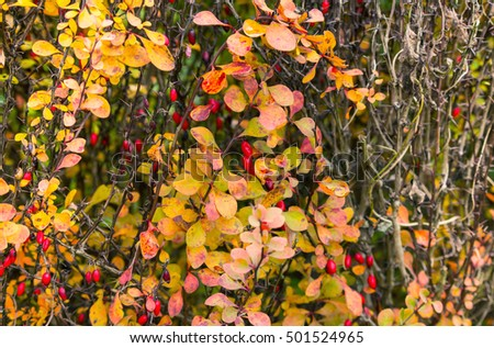 Background with autumn leaves.