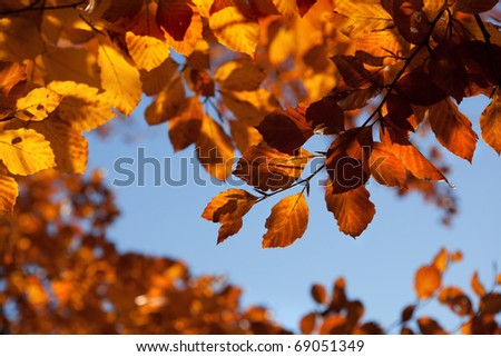 background with autumn leaves - stock photo