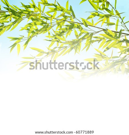 background with bamboo twig - stock photo