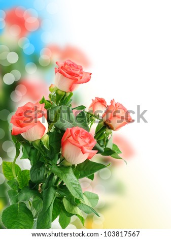 Background with beautiful rose