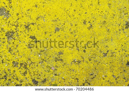 Background with bright yellow moss on asphalt - stock photo