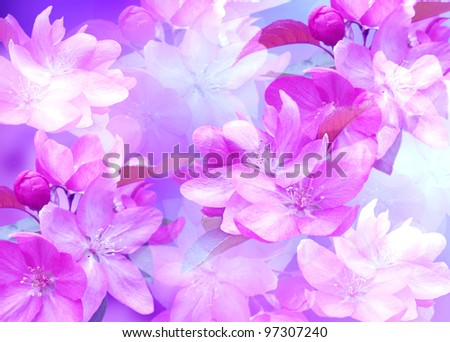 Background with cherry blossom - stock photo