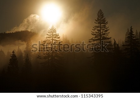 Background with copy space; sunrise over an evergreen forest with mist & fog; Mount Rainier National Park, Washington.  Pacific Northwest alpine forest - stock photo
