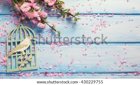 Background  with elegant  pink flowers on blue wooden planks. Flat lay. Selective focus. Place for text.  Toned image. - stock photo