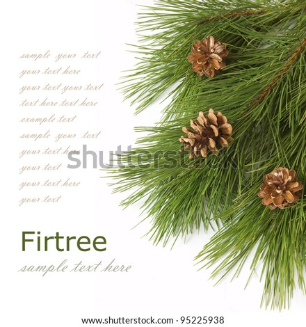 Background with fir tree branch and cones isolated on white with sample text