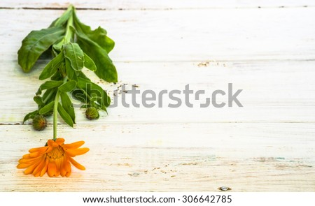 Background with flower of calendula, orange color isolated on white wood background useful as greeting card,wedding invitation, mothers day or invitations card. - stock photo