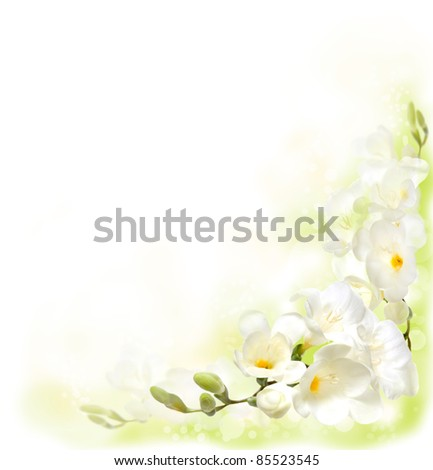 Background with Freesia - stock photo