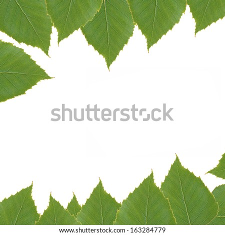 Background with green birch leaves