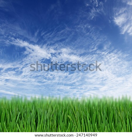 Background with green grass field and blue sky - stock photo