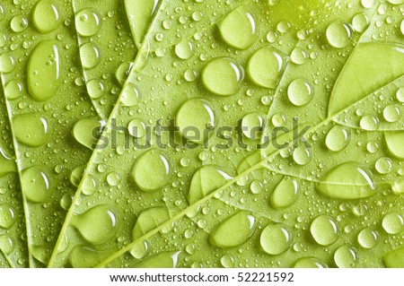 Background with green leaf covered water drops - stock photo