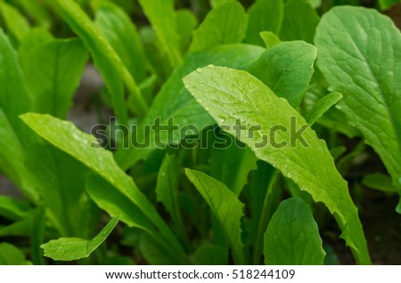 Background with green leaves(vegetables)