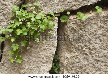 Background with leaves and  flowers on the stone wall - stock photo
