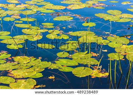 Background with leaves on water surface