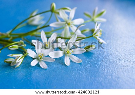 Background with little white flowers on cobalt blue painted wooden board. Delicate wildflowers on a blue wooden background. - stock photo