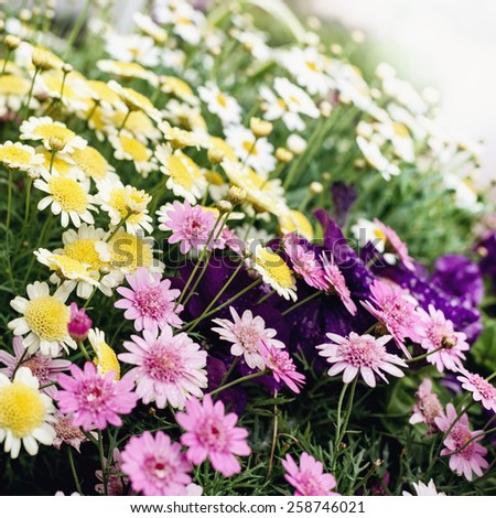 Background with lots of colorful summer flowers - stock photo