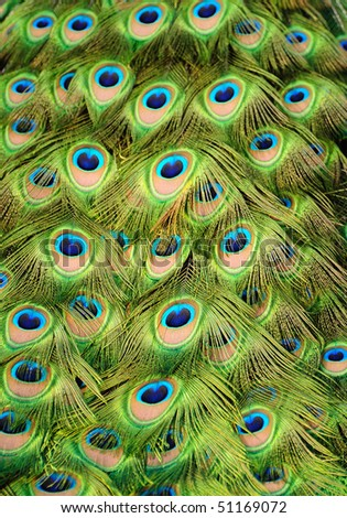 Background with patterns made of peacock feather - stock photo