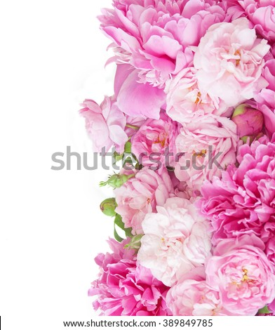 Background with peonies and roses isolated on white  - stock photo
