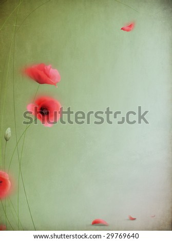 Background with poppies for cards - stock photo