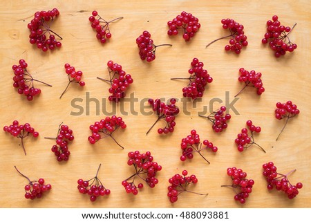 Background with red berries of viburnum