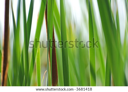 background with reed - stock photo
