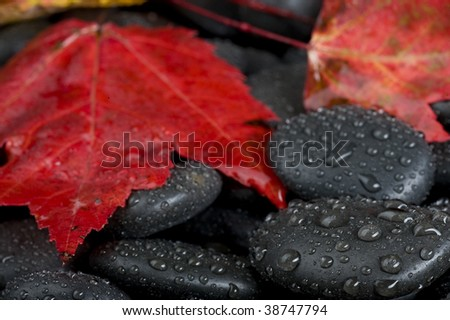 Background with rock and leaf