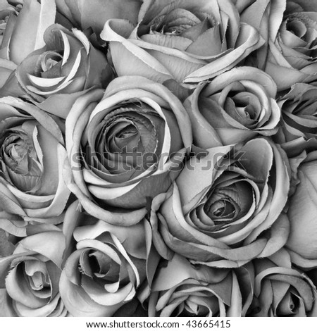 Background with roses in black and white - stock photo