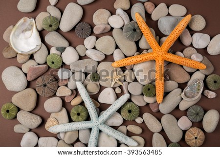 background with seashells and starfish