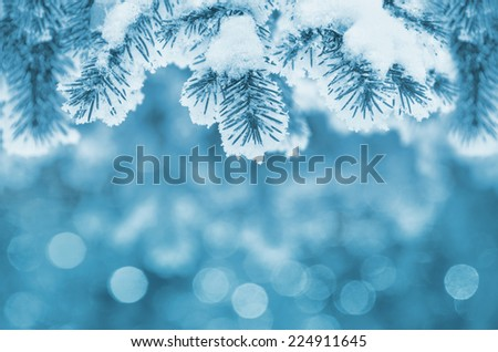 Background with snow-covered fir branches - stock photo