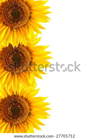 background with sunflower for happy summer or springtime - stock photo